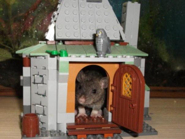 Домик крысе своими руками