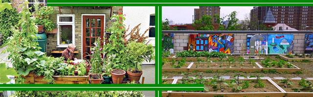 Можно ли заниматься садоводством в городе?
