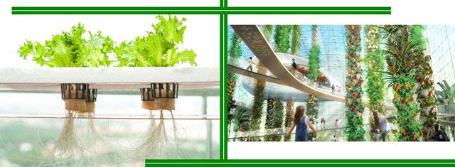 Можно ли растения культивировать без почвы?